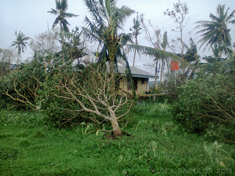 bagyo-yolanda-super-typhoon-haiyan-balasan-iloilo-03