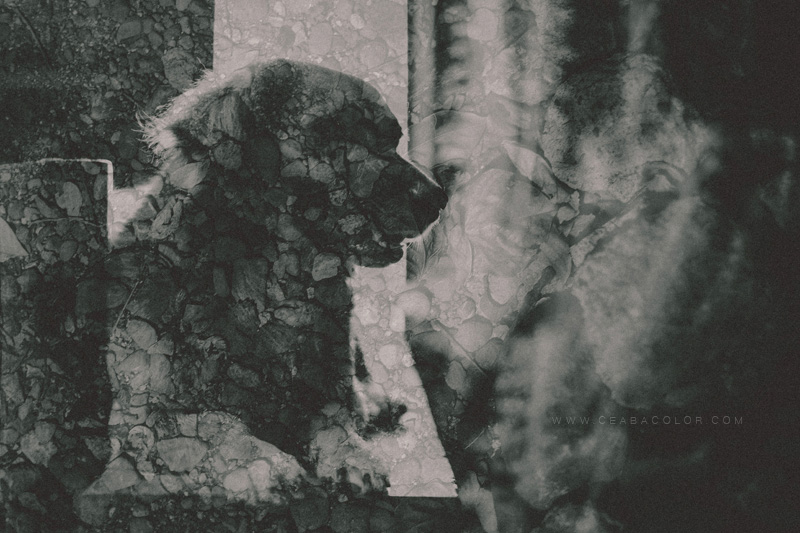 fuji x t1 double exposure black and white dog