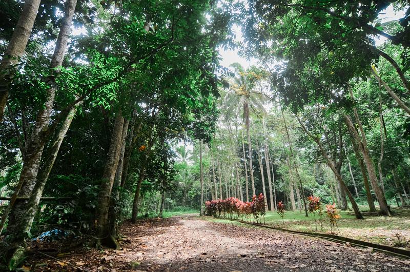 malagos-garden-park-davao-3-by-cea